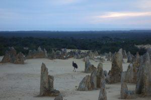 Spot the Emu at The Pinnacles Desert