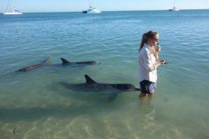 Dolphin Experience at Monkey Mia