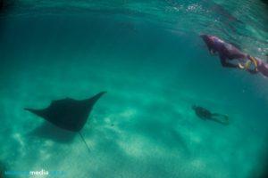 Snorkeling with a manta ray at Coral Bay