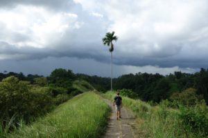 Hiking Campuhan Ridge at Ubud